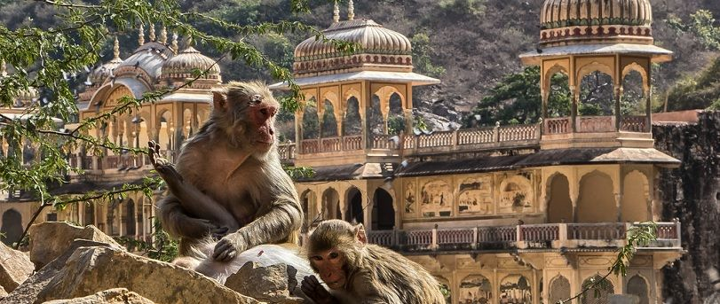 Galtaji Monkey Temple