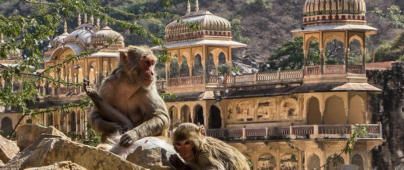 Galtaji Monkey Temple