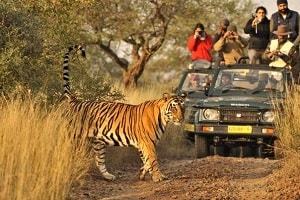 Ranthambore Safari Bookings