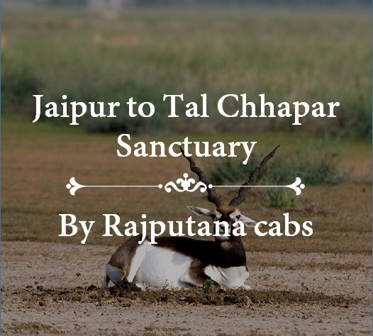 Jaipur to Tal Chhapar Sanctuary Taxi