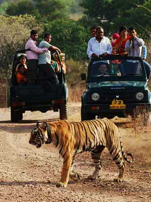 Tiger safari Ranthambore National Park