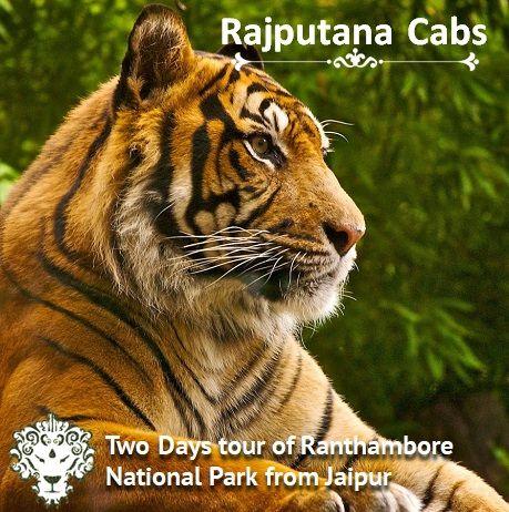 2 days Ranthambore Tour from Rajputana Cabs