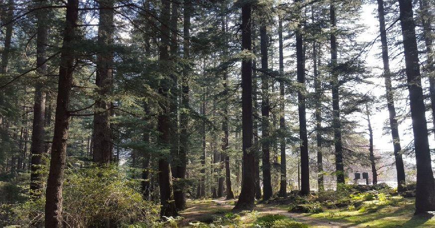 Van Vihar National Park Manali